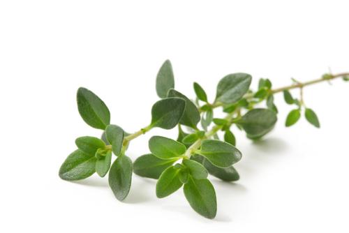 Для простуженных: крем с эфирным маслом тимьяна